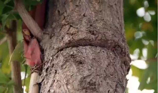 an-injured-tree-01