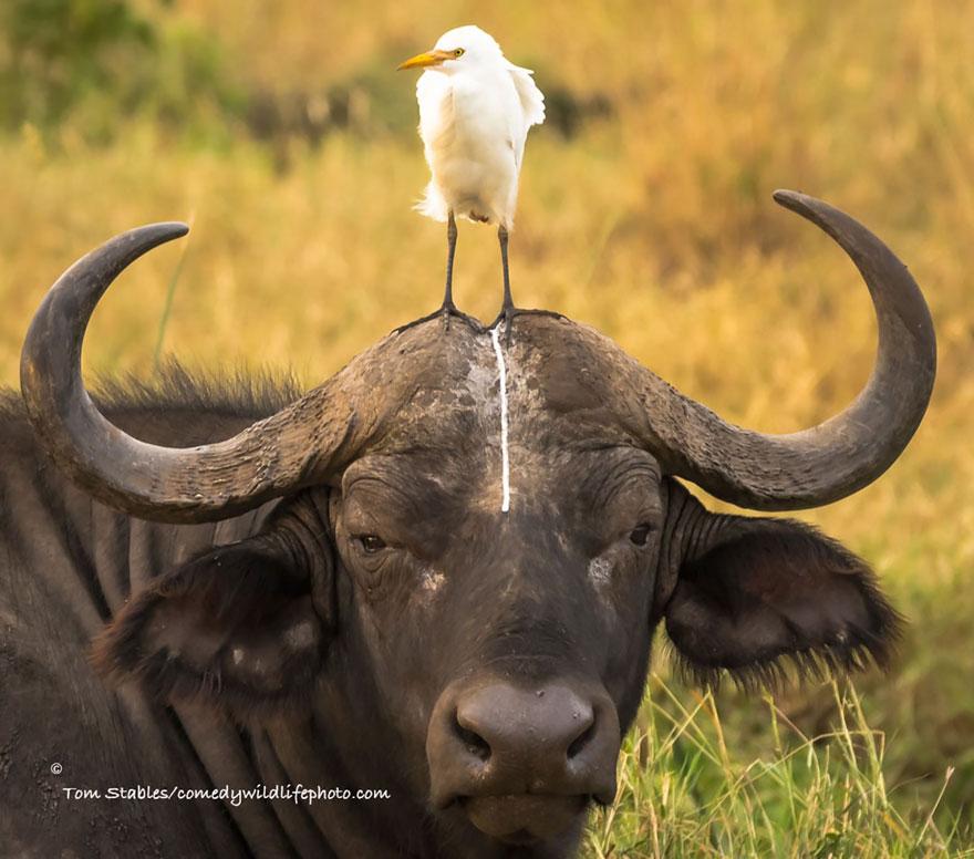 comedy-wildlife-photography-awards-08