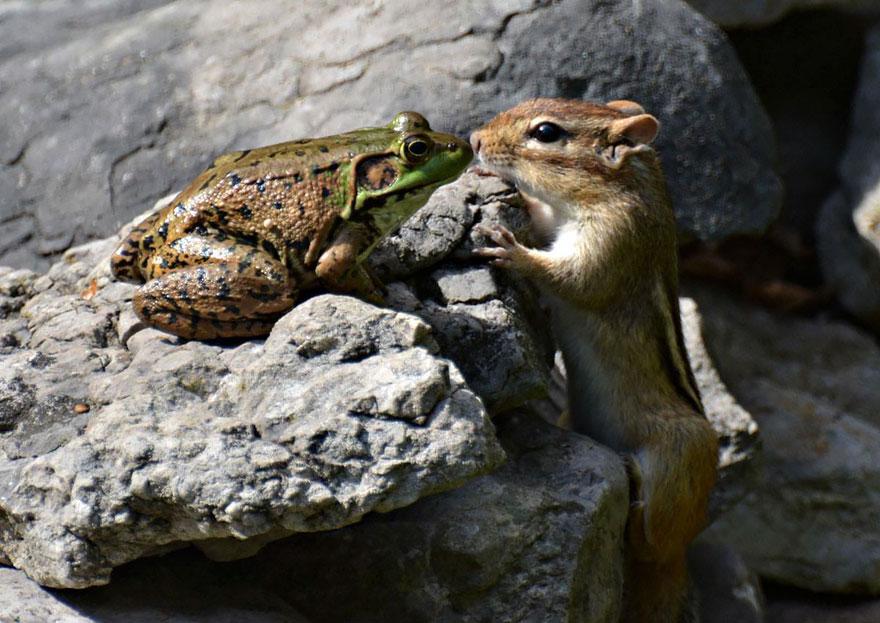 comedy-wildlife-photography-awards-12