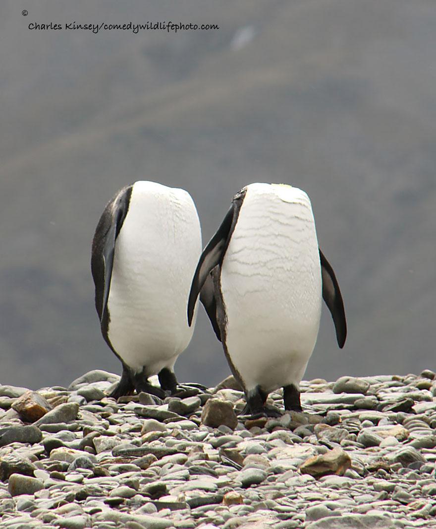 comedy-wildlife-photography-awards-16