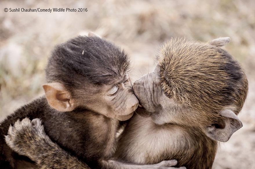 comedy-wildlife-photography-awards-31