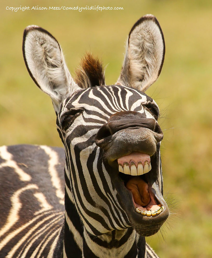 comedy-wildlife-photography-awards-35