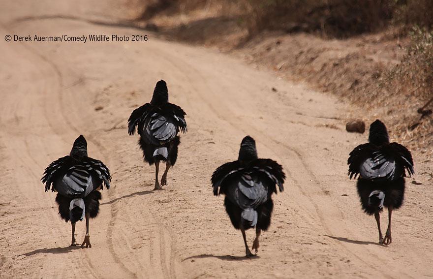 comedy-wildlife-photography-awards-37