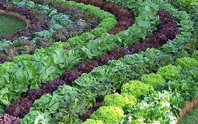 how-to-grow-vegetables-more-beautiful-than-the-garden-00