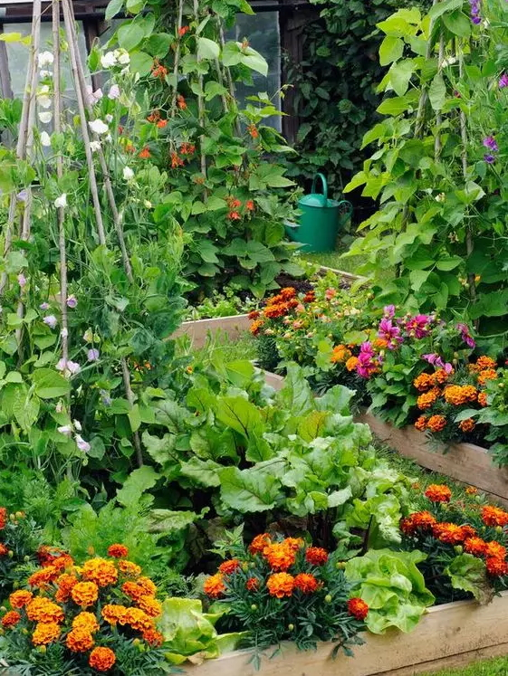 how-to-grow-vegetables-more-beautiful-than-the-garden-01