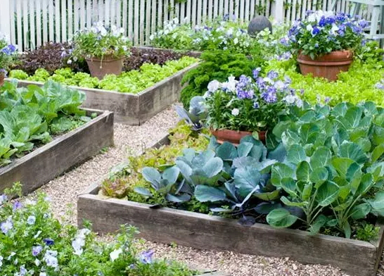 how-to-grow-vegetables-more-beautiful-than-the-garden-02