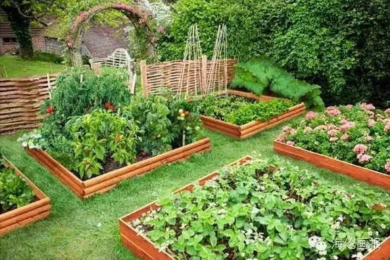 how-to-grow-vegetables-more-beautiful-than-the-garden-03