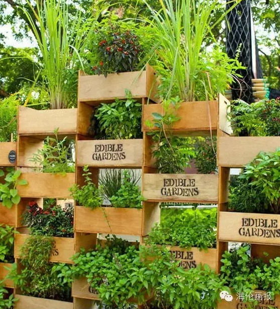 how-to-grow-vegetables-more-beautiful-than-the-garden-04