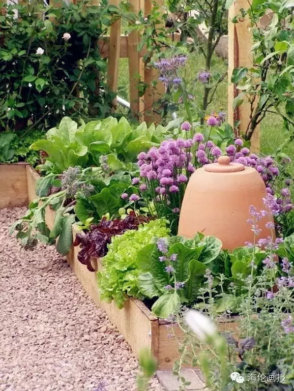 how-to-grow-vegetables-more-beautiful-than-the-garden-09