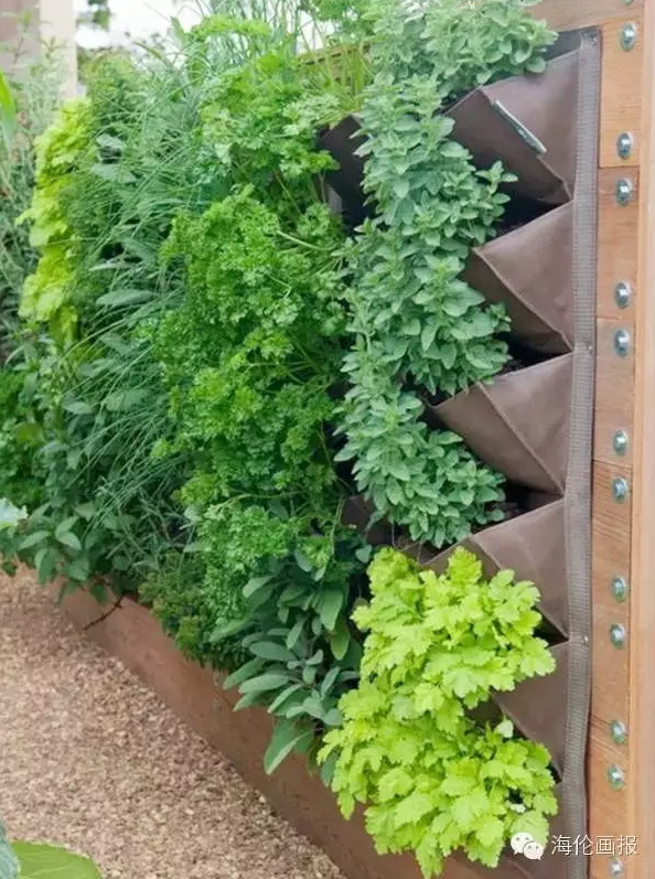 how-to-grow-vegetables-more-beautiful-than-the-garden-10