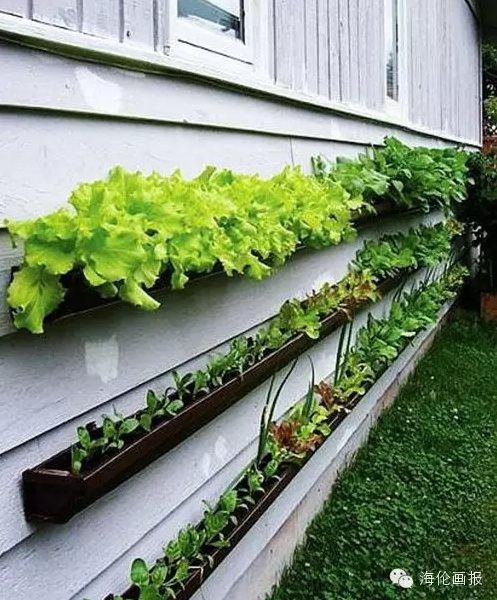 how-to-grow-vegetables-more-beautiful-than-the-garden-11