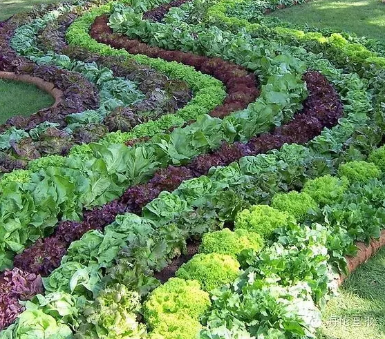 how-to-grow-vegetables-more-beautiful-than-the-garden-13