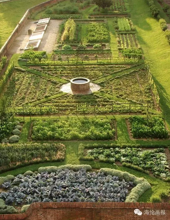 how-to-grow-vegetables-more-beautiful-than-the-garden-15