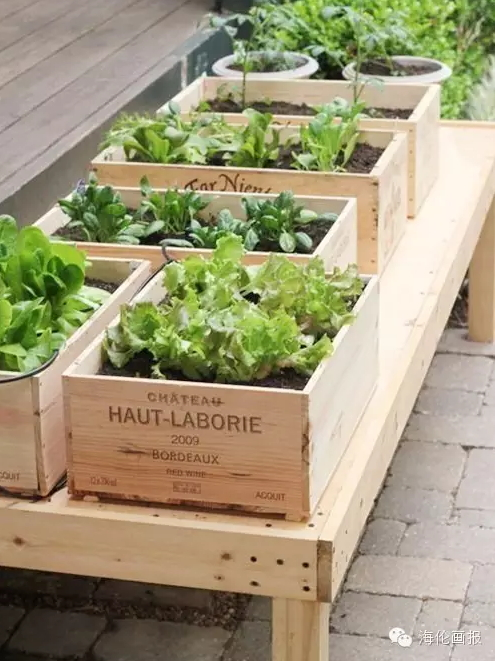 how-to-grow-vegetables-more-beautiful-than-the-garden-16