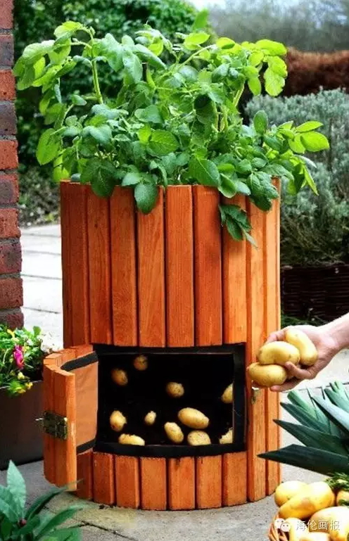 how-to-grow-vegetables-more-beautiful-than-the-garden-17