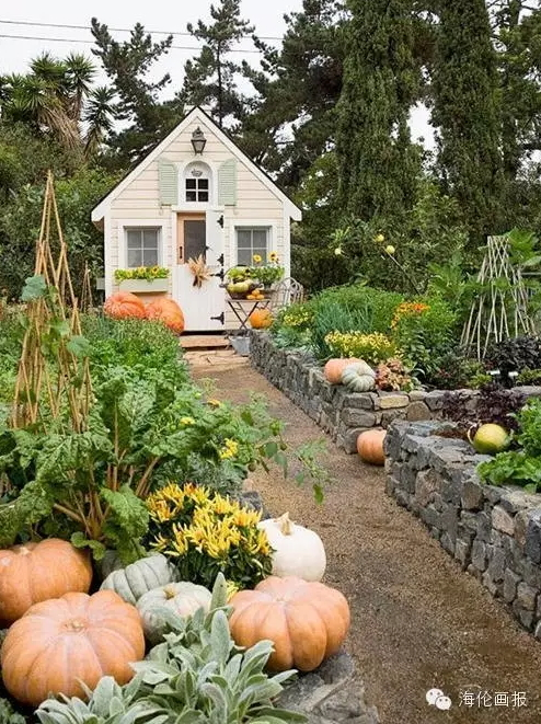 how-to-grow-vegetables-more-beautiful-than-the-garden-20