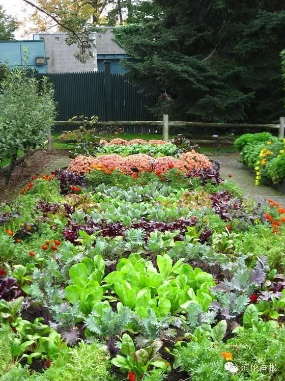 how-to-grow-vegetables-more-beautiful-than-the-garden-25