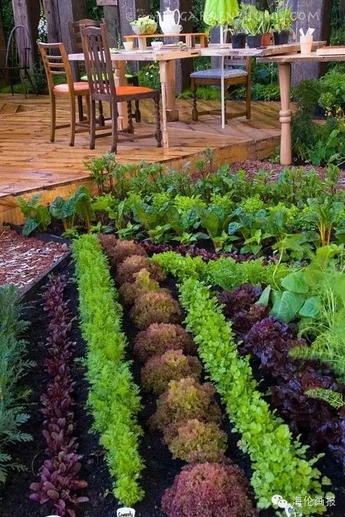 how-to-grow-vegetables-more-beautiful-than-the-garden-26