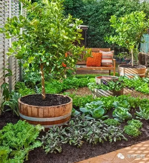 how-to-grow-vegetables-more-beautiful-than-the-garden-27