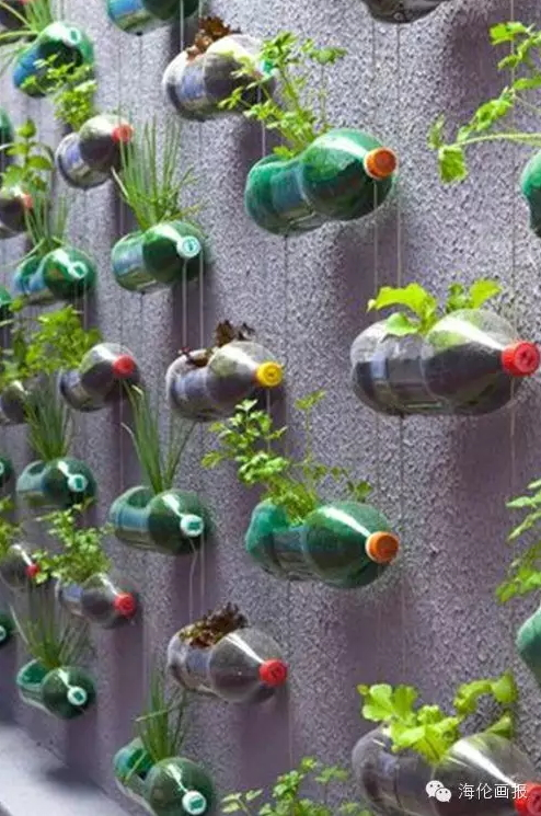how-to-grow-vegetables-more-beautiful-than-the-garden-29