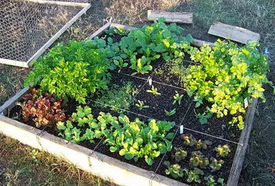 how-to-grow-vegetables-more-beautiful-than-the-garden-34