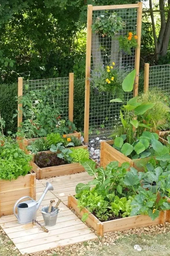 how-to-grow-vegetables-more-beautiful-than-the-garden-35