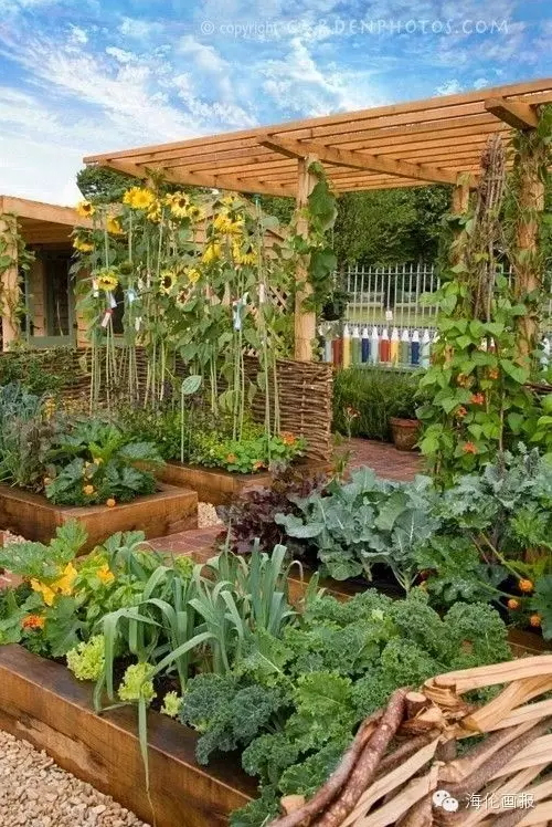 how-to-grow-vegetables-more-beautiful-than-the-garden-36