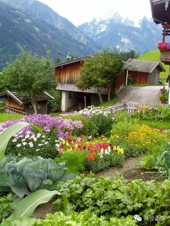 how-to-grow-vegetables-more-beautiful-than-the-garden-37