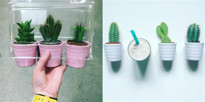 ikea-has-fresh-cute-little-cactus-gadgets-01
