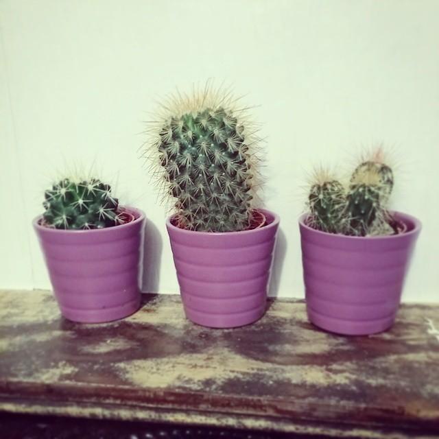 ikea-has-fresh-cute-little-cactus-gadgets-08