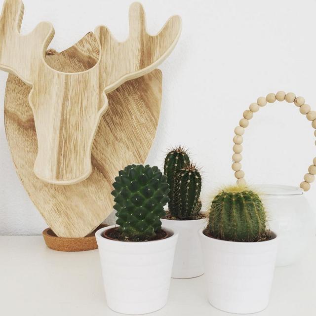 ikea-has-fresh-cute-little-cactus-gadgets-09