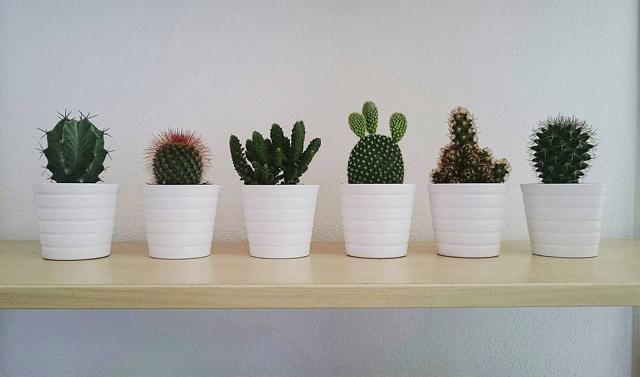 ikea-has-fresh-cute-little-cactus-gadgets-10