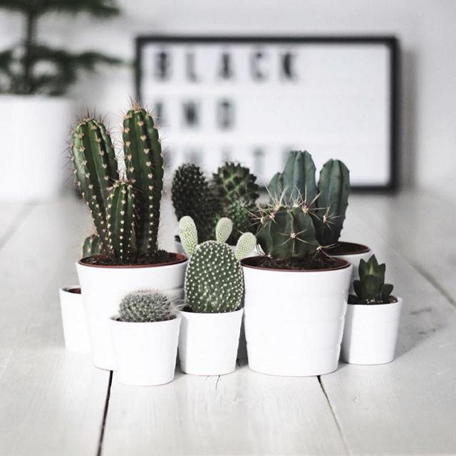 ikea-has-fresh-cute-little-cactus-gadgets-11