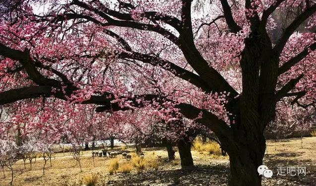 the-world-s-most-beautiful-heng-fa-chuen-14