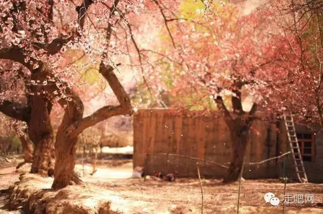 the-world-s-most-beautiful-heng-fa-chuen-16