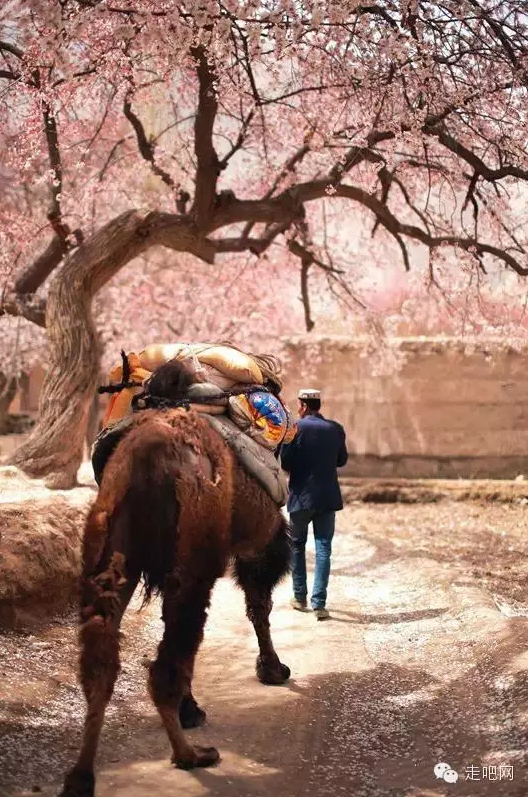 the-world-s-most-beautiful-heng-fa-chuen-18