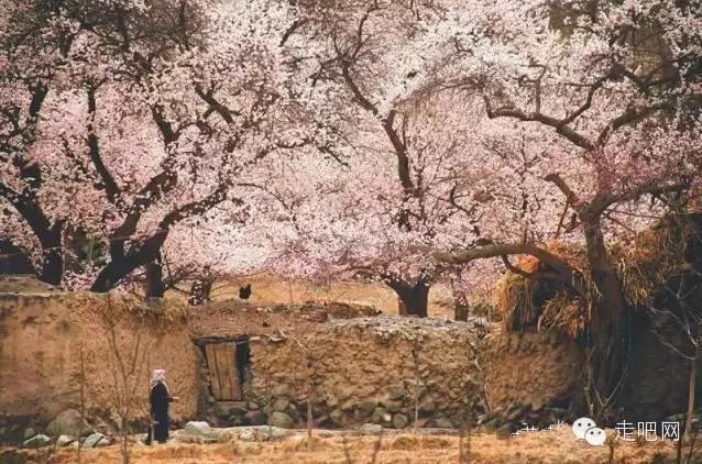 the-world-s-most-beautiful-heng-fa-chuen-21