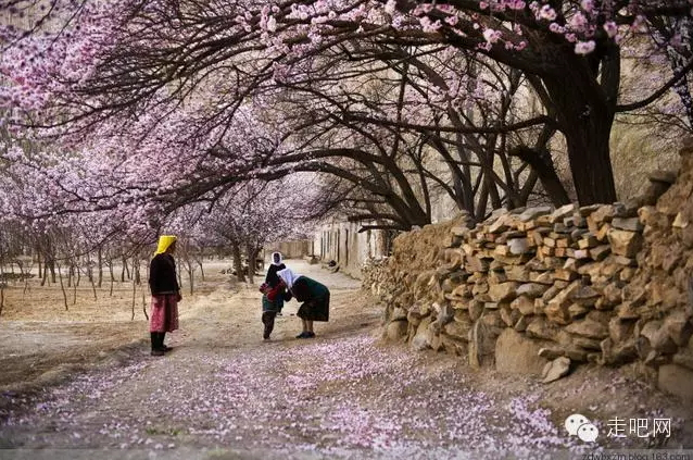 the-world-s-most-beautiful-heng-fa-chuen-25