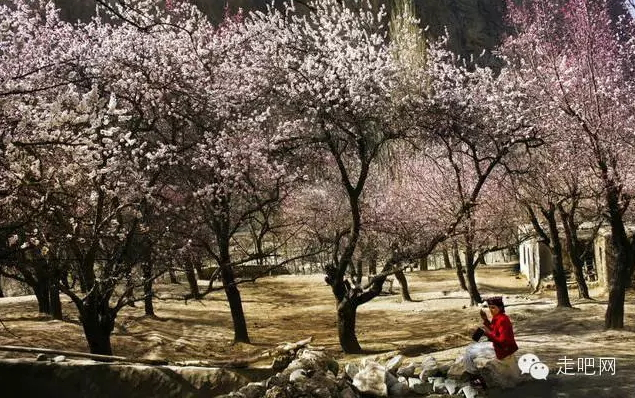 the-world-s-most-beautiful-heng-fa-chuen-26