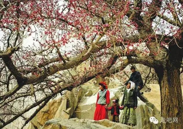 the-world-s-most-beautiful-heng-fa-chuen-27