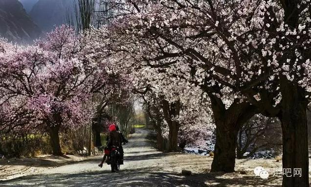 the-world-s-most-beautiful-heng-fa-chuen-28