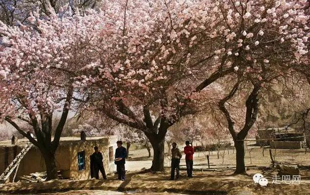 the-world-s-most-beautiful-heng-fa-chuen-29