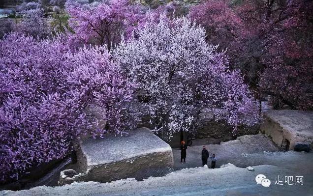 the-world-s-most-beautiful-heng-fa-chuen-30