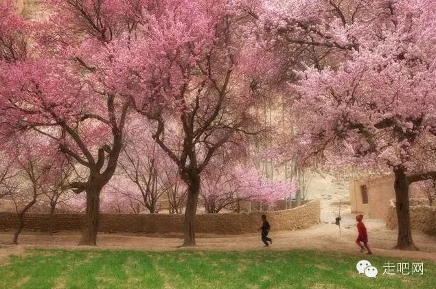 the-world-s-most-beautiful-heng-fa-chuen-34