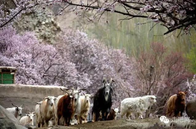 the-world-s-most-beautiful-heng-fa-chuen-40