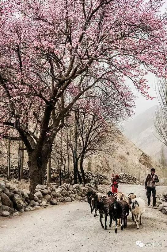 the-world-s-most-beautiful-heng-fa-chuen-41