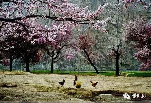 the-world-s-most-beautiful-heng-fa-chuen-50