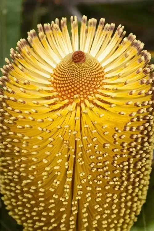 these-flowers-are-too-weird-19